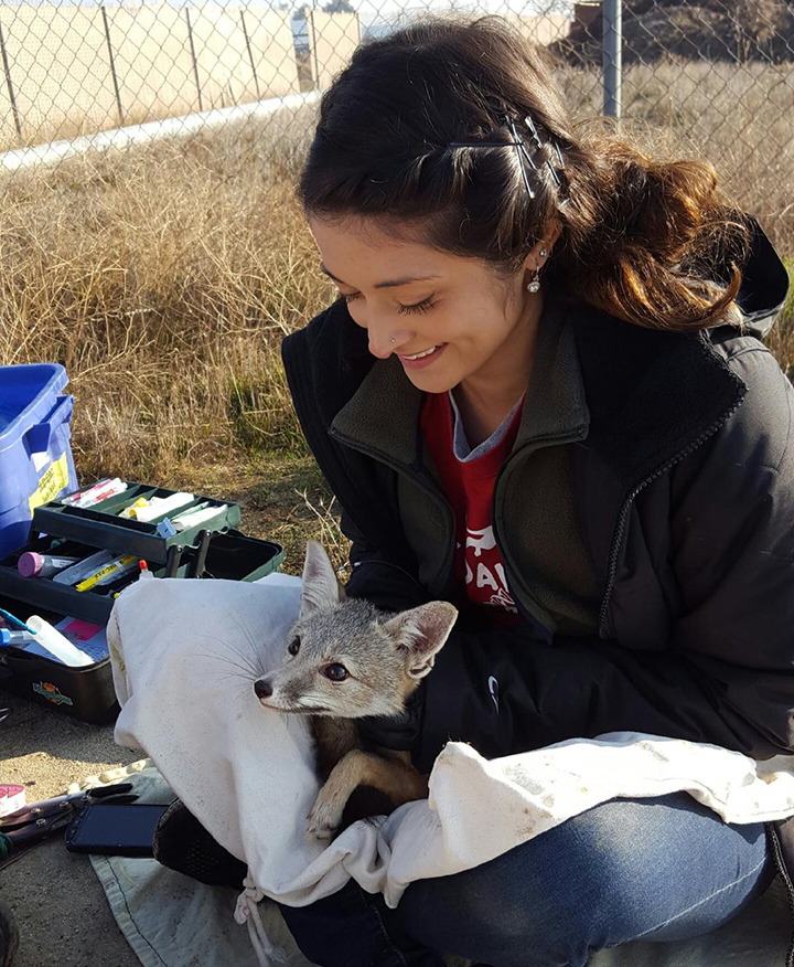 Second year DVM and incoming dual degree student Jane Riner with an endangered San Joaquin kit fox in Bakersfield, California.